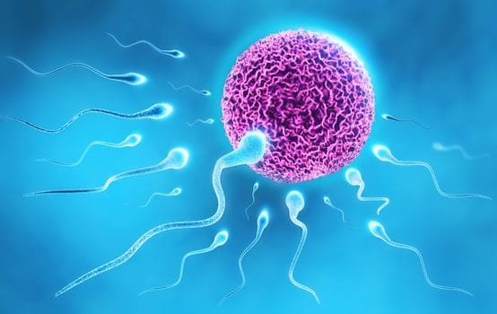Cellgevity and fertility